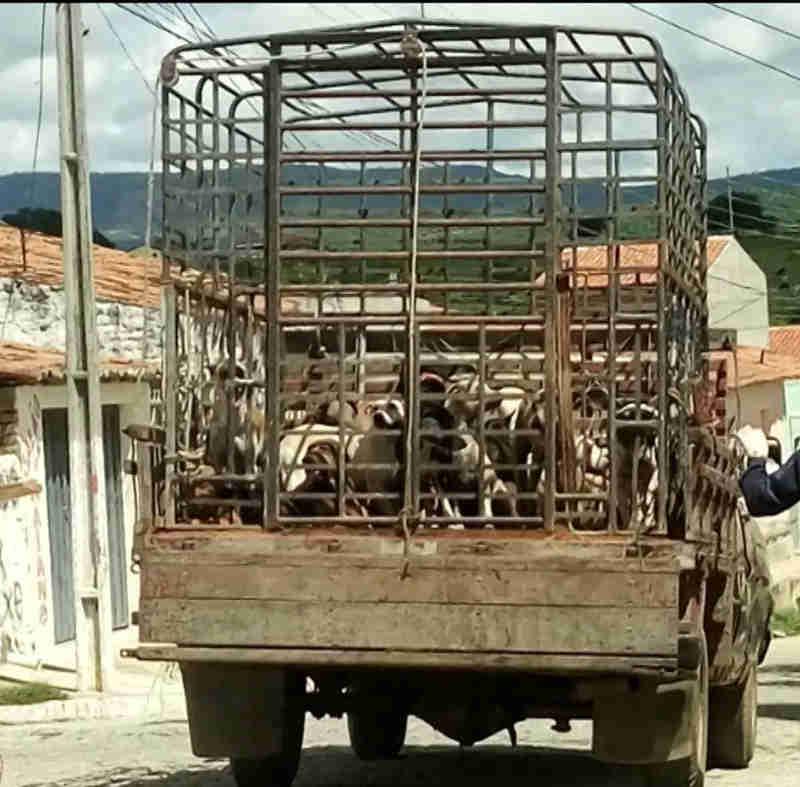 Cerca de 30 animais de rua foram sacrificados nesta terça-feira (6) no município de Igaracy (Foto: Reprodução / Tv Paraíba)