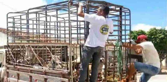 Prefeitura de Igaracy (PB) diz que 'não pactua' com matança de cães a pauladas
