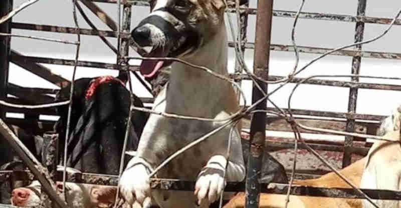 Cerca de 113 animais sofreram maus-tratos em João Pessoa, PB