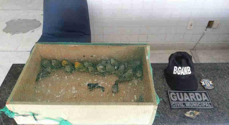 Dupla é presa em flagrante por tráfico de aves em Camaragibe, PE
