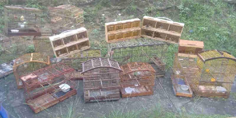 Operação da Cipoma faz rondas em feiras livres de todo o Estado para combater crime de comércio ilegal de animais silvestres. - Foto: Cipoma-PMPE/Divulgação