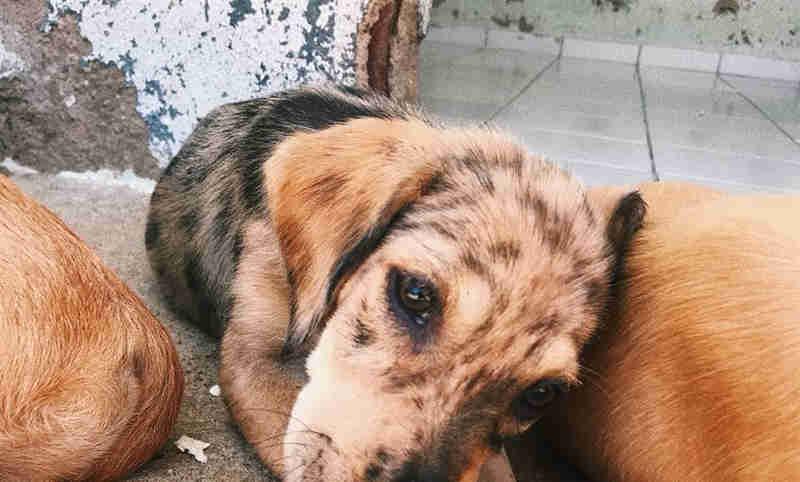 Abrigo promove feira de adoção de cães neste sábado em Boa Viagem, em Recife, PE