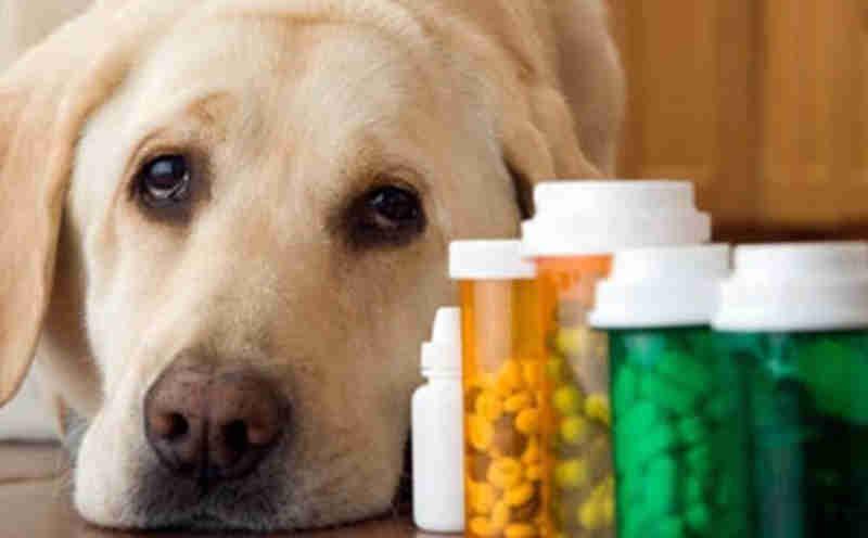 Teresina (PI) pode ter primeira farmácia veterinária gratuita