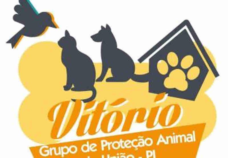 Protetores de União (PI) criam grupo voluntário para cuidar de animais abandonados
