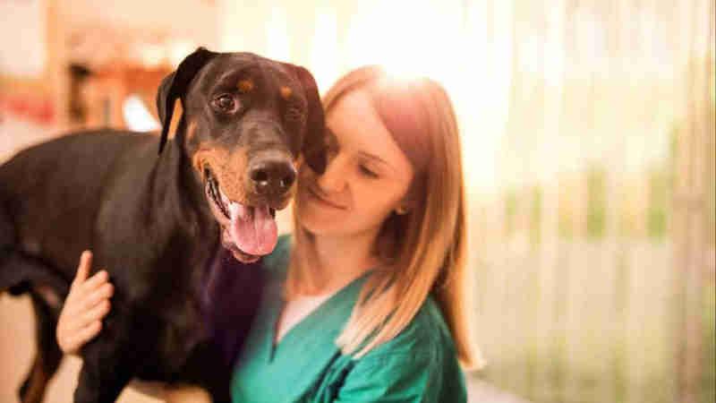 PAN quer 500 mil euros para ajudar famílias na esterilização de animais em Portugal