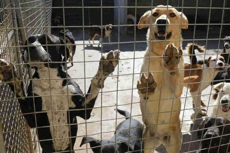 Mil animais abandonados por ano em Coimbra, Portugal