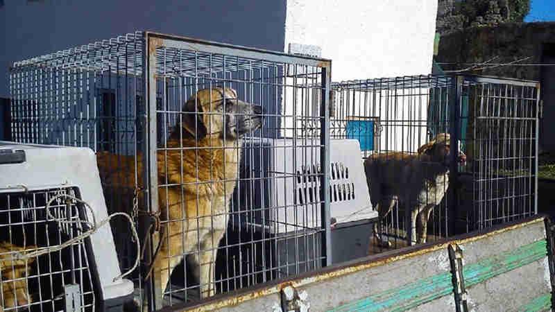 Portugal: Centena e meia de associações exigem do Governo dinheiro para esterilização de animais
