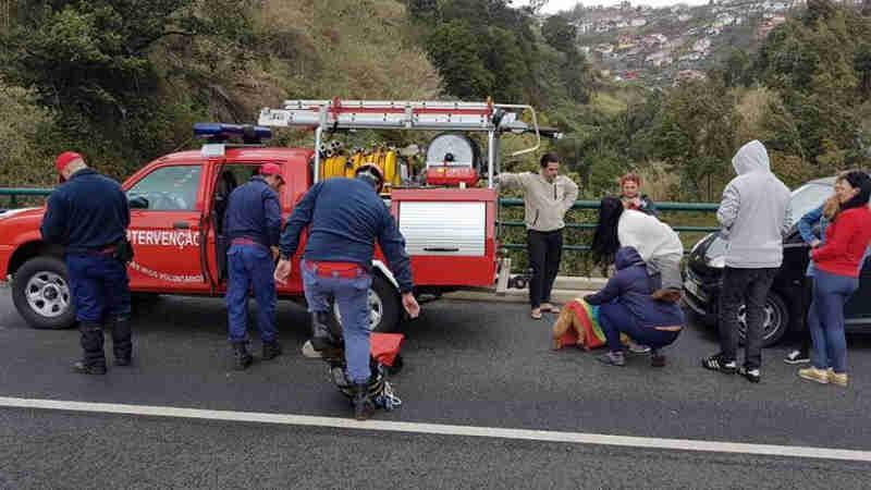 Bombeiros resgatam cão do interior de uma ribeira no Funchal, em Portugal