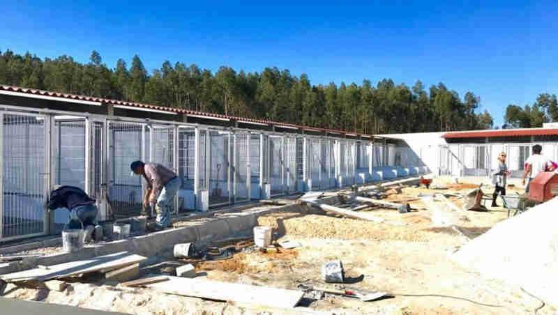 Portugal: Canil-gatil em Tomar com obras de 100 mil euros para duplicar a sua capacidade