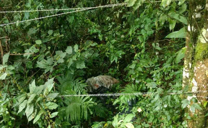 Dezenas de cachorros são encontrados mortos em matagal no bairro Santa Felicidade, em Curitiba, PR