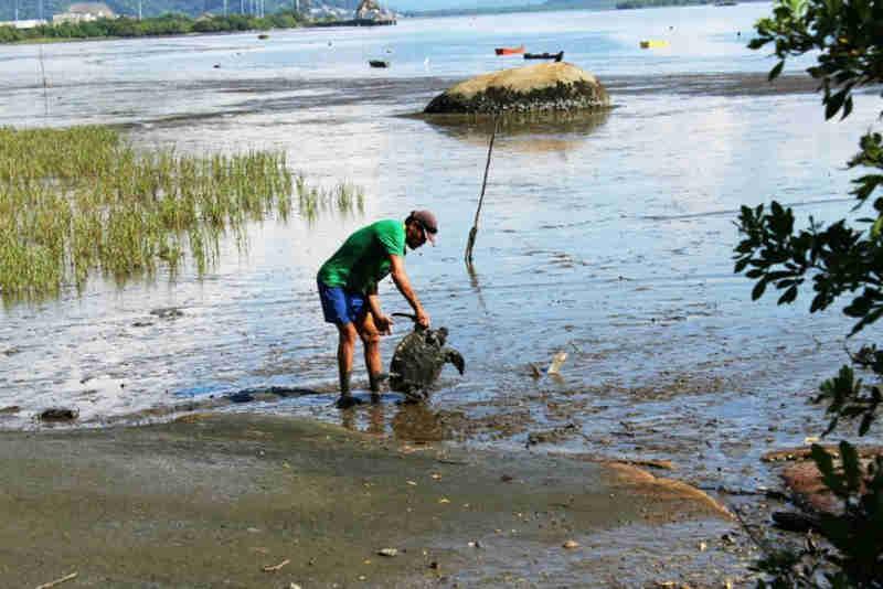 Tartarugas são salvas em Antonina (PR) e moradores denunciam crime ambiental