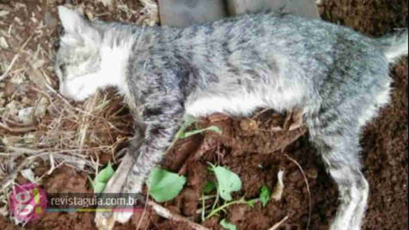Morador denuncia envenenamento de animais em Medianeira, PR