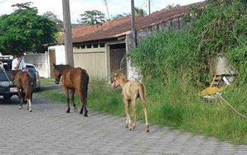 MP aciona Prefeitura de Pontal do Paraná (PR) contra animais nas ruas