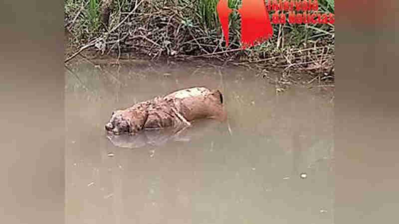 Cachorro é amarrado e jogado em riacho em Prudentópolis, PR