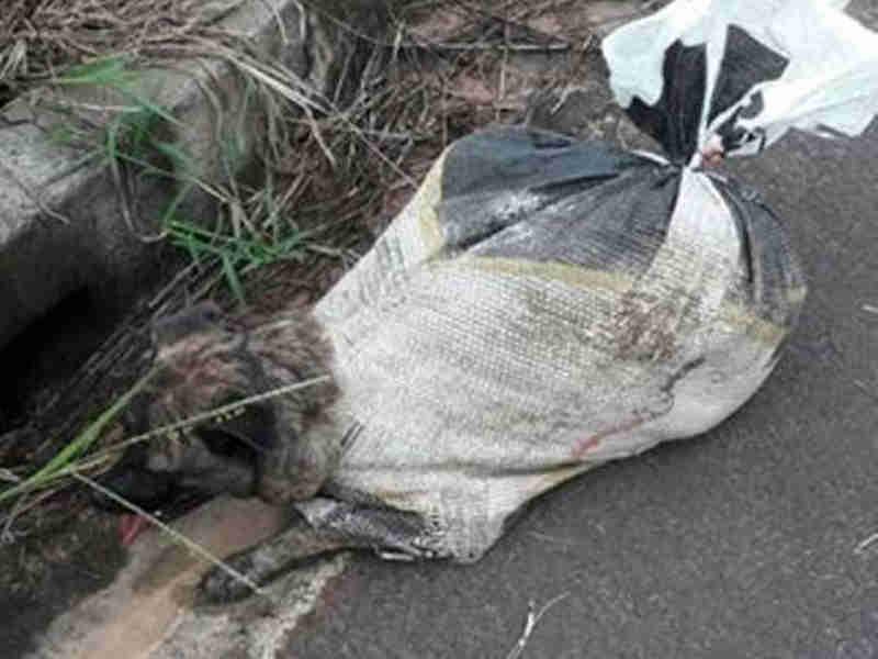 Moradores encontram sacos com cães e conseguem salvar um deles