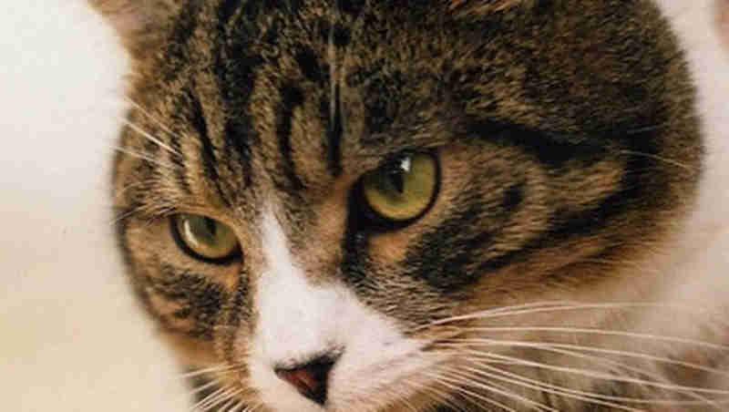 Câmara de Umuarama (PR) vota projeto que pune maus-tratos aos animais