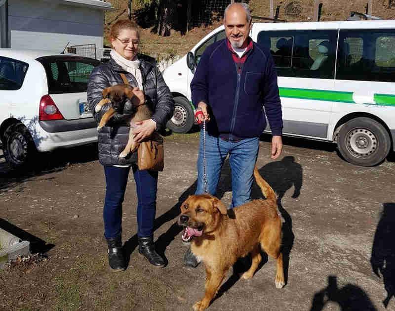 Autarquia incentiva adoção de cães abandonados em Lamego, Portugal
