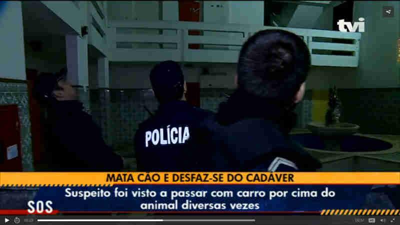 Homem mata cão e desfaz-se do cadáver, em Portugal