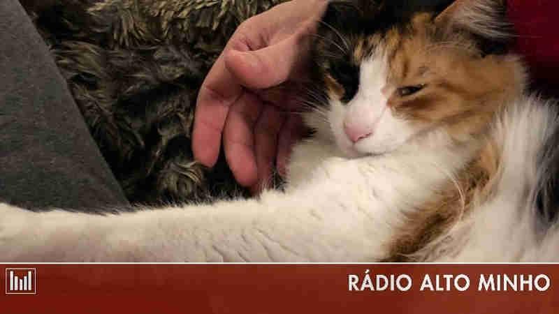 Campanha para o não abandono de animais de companhia começa quarta-feira em Portugal