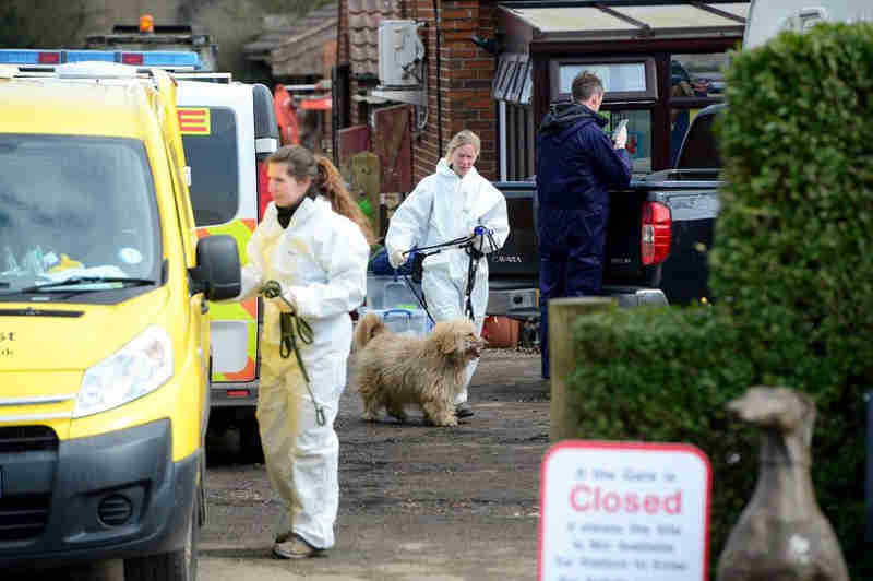 Mais de 100 cães retirados de clínica veterinária no Reino Unido