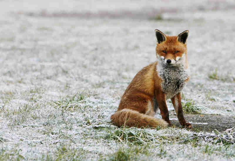No Reino Unido há quem venda pêlo de animal por pêlo sintético