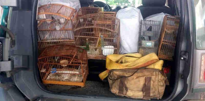 Pássaros são resgatados pela Polícia Ambiental no noroeste fluminense