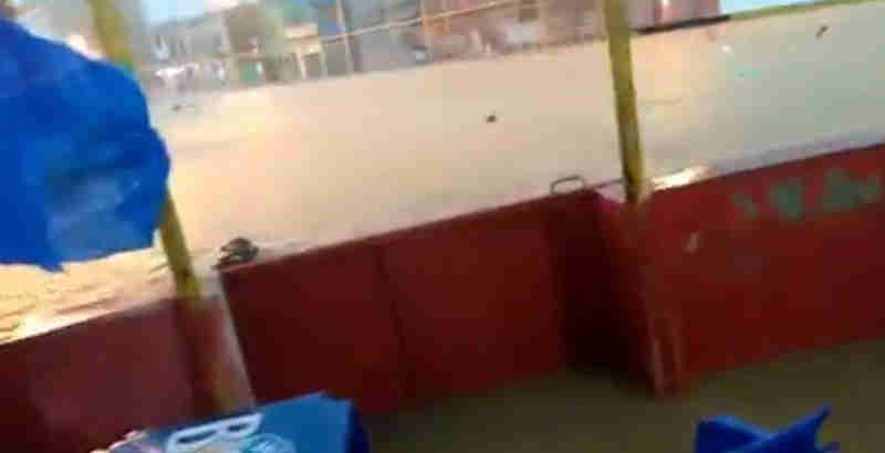 Chuva faz com que cachorros saiam boiando na enchente em Belford Roxo, RJ