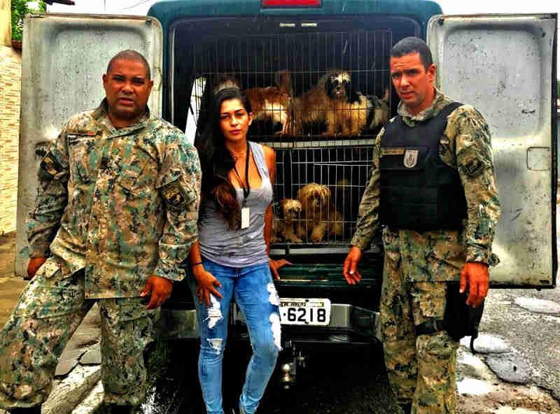 Cães que sofriam maus-tratos são resgatados de criadouro comercial em Cabo Frio, RJ