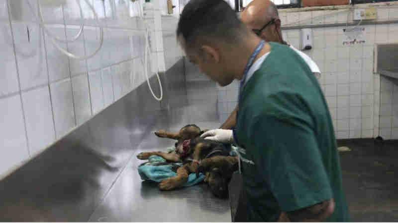 Filhote de cachorro é atingido por tiro de fuzil no Caju, Zona Norte do Rio