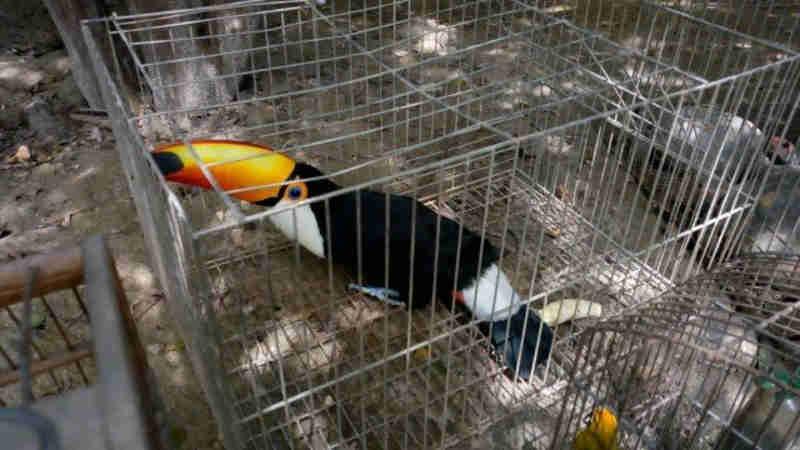 Policiais militares resgatam 80 aves e jabutis mantidos em cativeiro em Seropédica, RJ