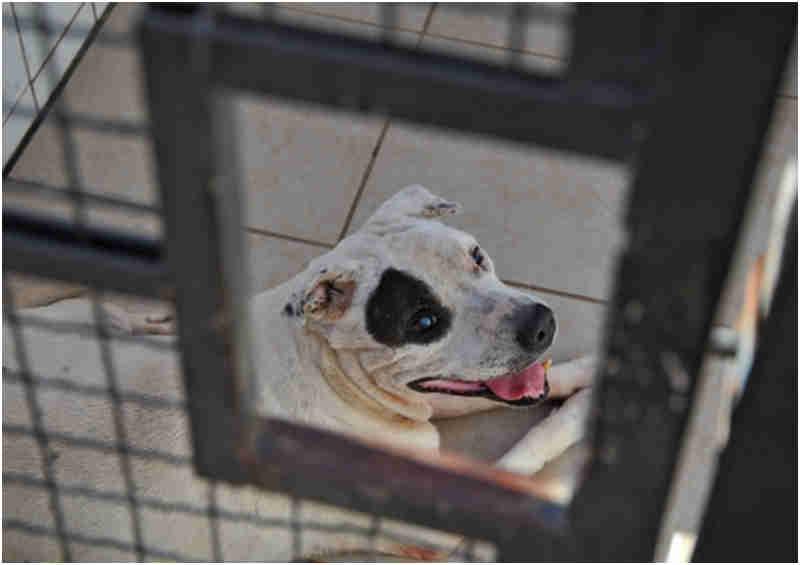 Faltas em consultas comprometem atendimentos no Centro de Bem-Estar Animal em Canoas, RS