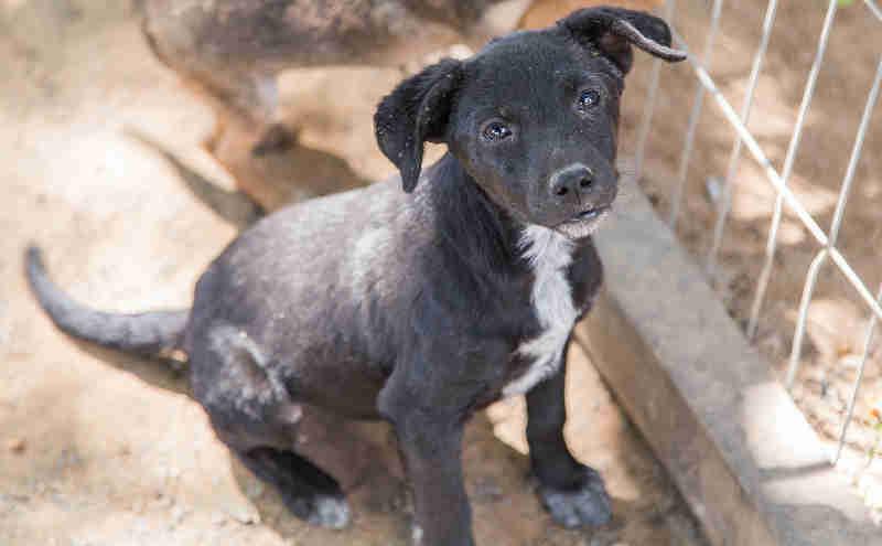 Gravataí (RS) incentiva adoção de animais; canil conta com 360 cachorros, 22 cavalos e nove gatos
