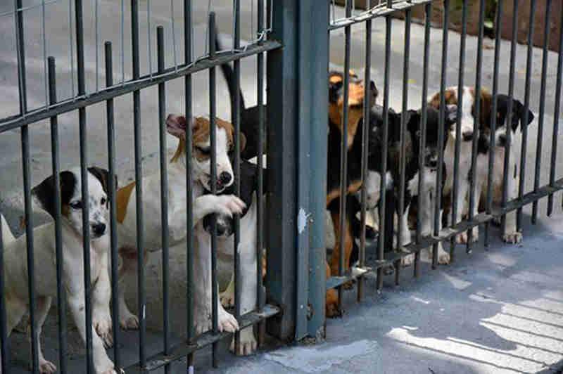 Procura por cães e gatos para adoção aumenta em Santa Cruz do Sul, RS
