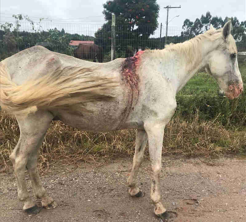 Empresária acusa dona de sítio de maltratar animais em Balneário Piçarras, SC