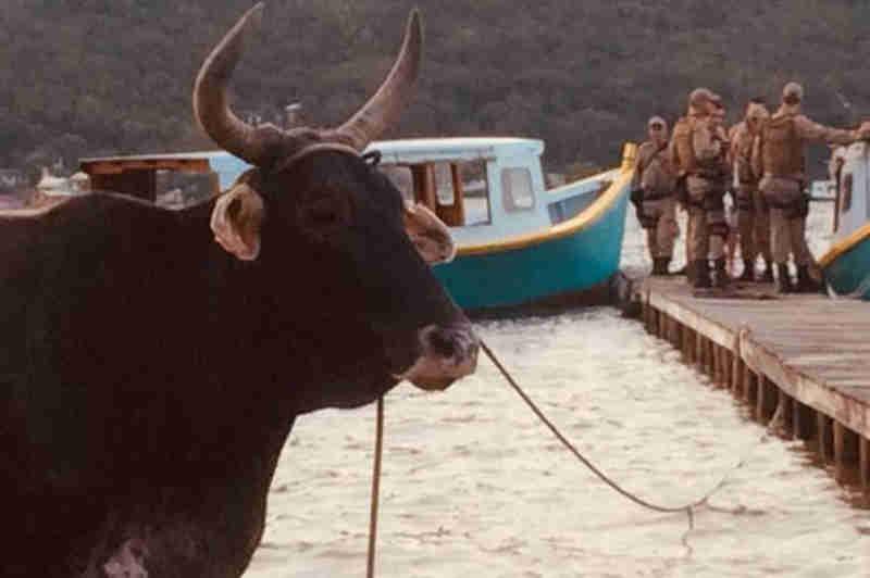 Polícia Militar impede farra do boi na Costa da Lagoa, em Florianópolis, SC