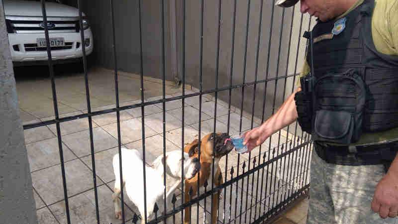 Guardas resgatam cães que passavam fome e sede no Balneário Camboriú, SC