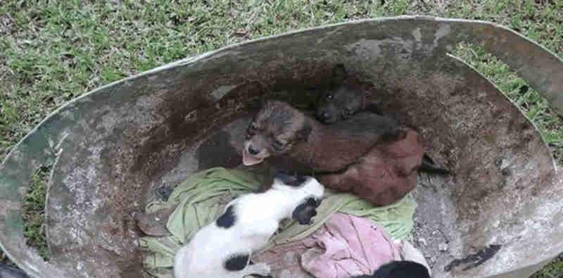 Projeto de lei prevê multa para quem maltratar animais em Canoinhas, SC