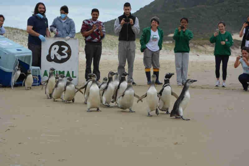 Florianópolis (SC) ganhará o maior centro de reabilitação de animais marinhos do Brasil