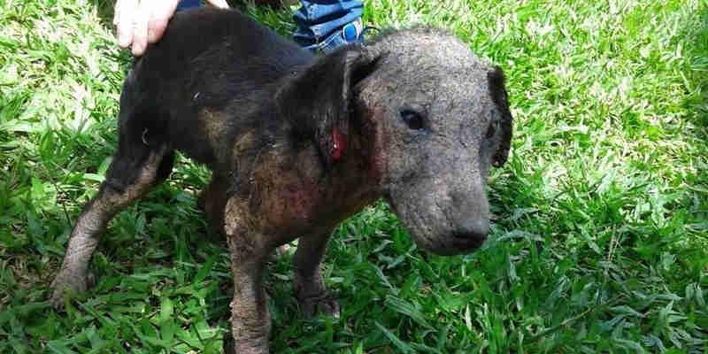 Contribua para salvar mais animais abandonados em Içara, SC