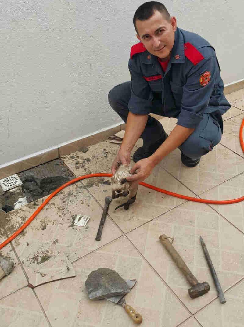 Bombeiros resgatam filhote de gato preso há 2 dias em tubulação em Itajaí, SC