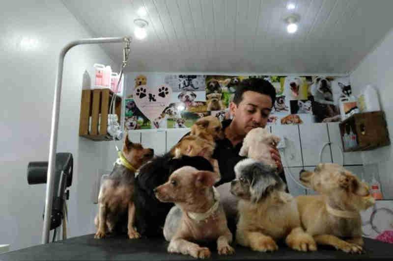 Saiba como ajudar os cachorros resgatados no canil clandestino em Jaraguá do Sul, SC