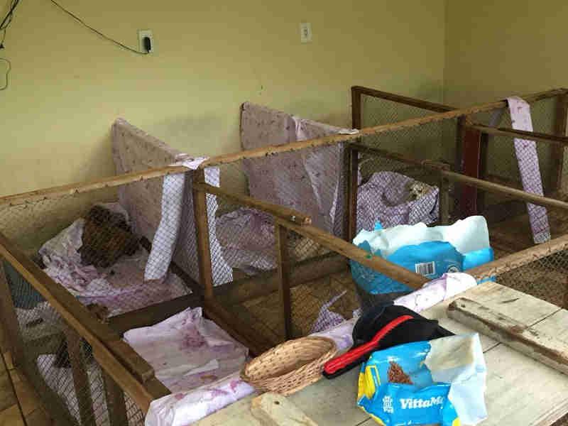 Dono de canil clandestino que tinha 77 cães em SC pode levar multa de quase R$ 41 mil