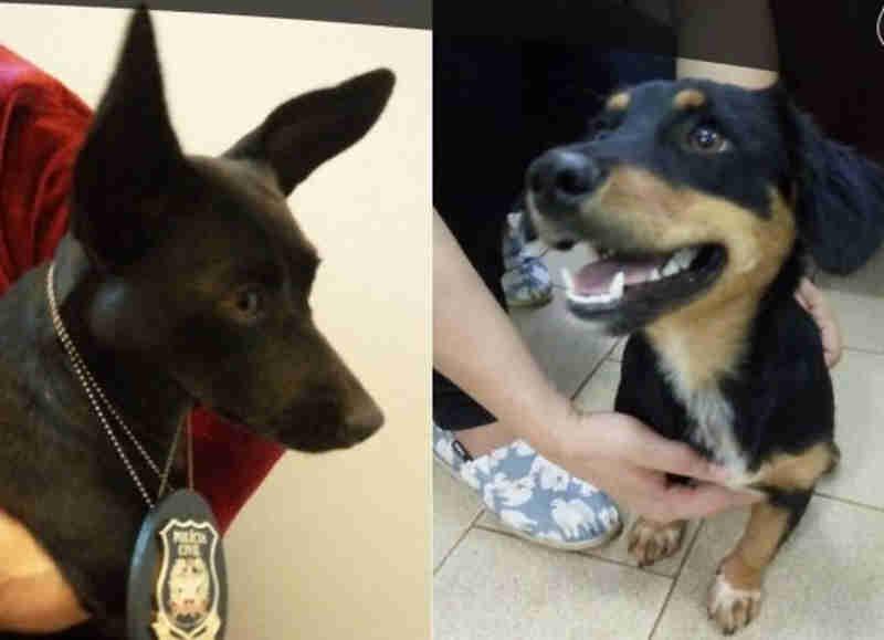Polícia Civil resgata cães agredidos com socos e pontapés em Modelo, SC