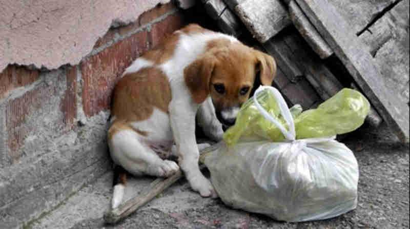 Comunidade pode denunciar casos de maus-tratos aos animais no site da Prefeitura de Xanxerê, SC