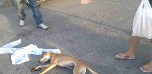 Cachorro agonizando após ser arrastado por uma moto em Itabaiana (SE) (Foto: Reprodução/Vídeo)