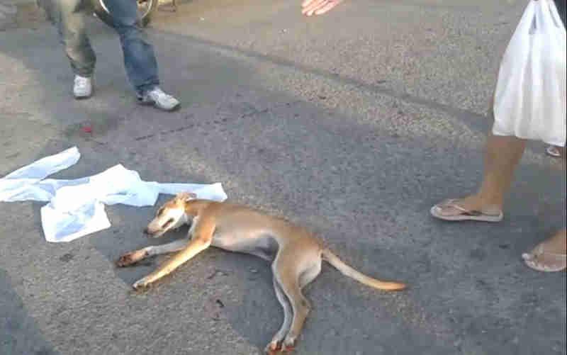 Homem é flagrado usando moto para arrastar cachorro em Itabaiana, SE