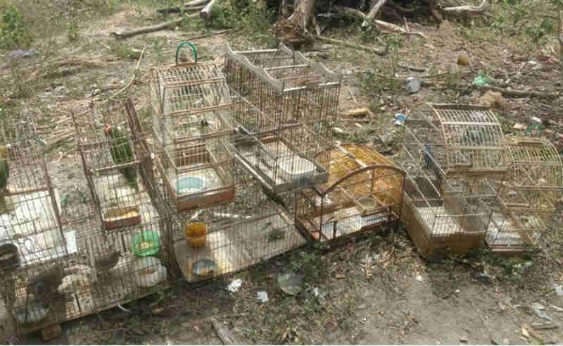 Pelotão Ambiental liberta aves mantidas em cativeiros em dois municípios sergipanos