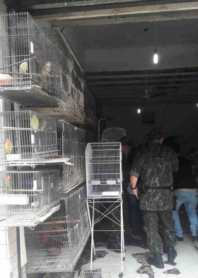 Os animais estavam sem alimentação adequada, ventilação e água (Foto: Divulgação)