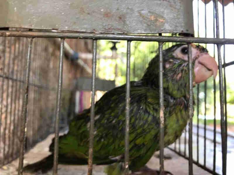 Homem é multado em R$ 5 mil por manter aves sem autorização em Arco-Íris, SP