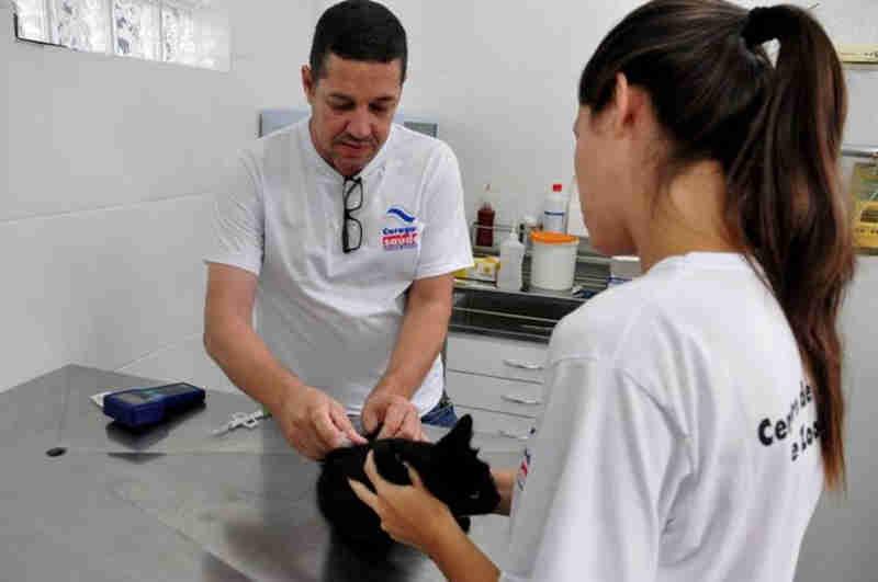 Caraguá (SP) encaminha mais de 500 animais para castração gratuita